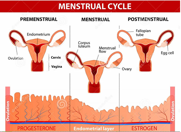 Does clomid cause cramps before period