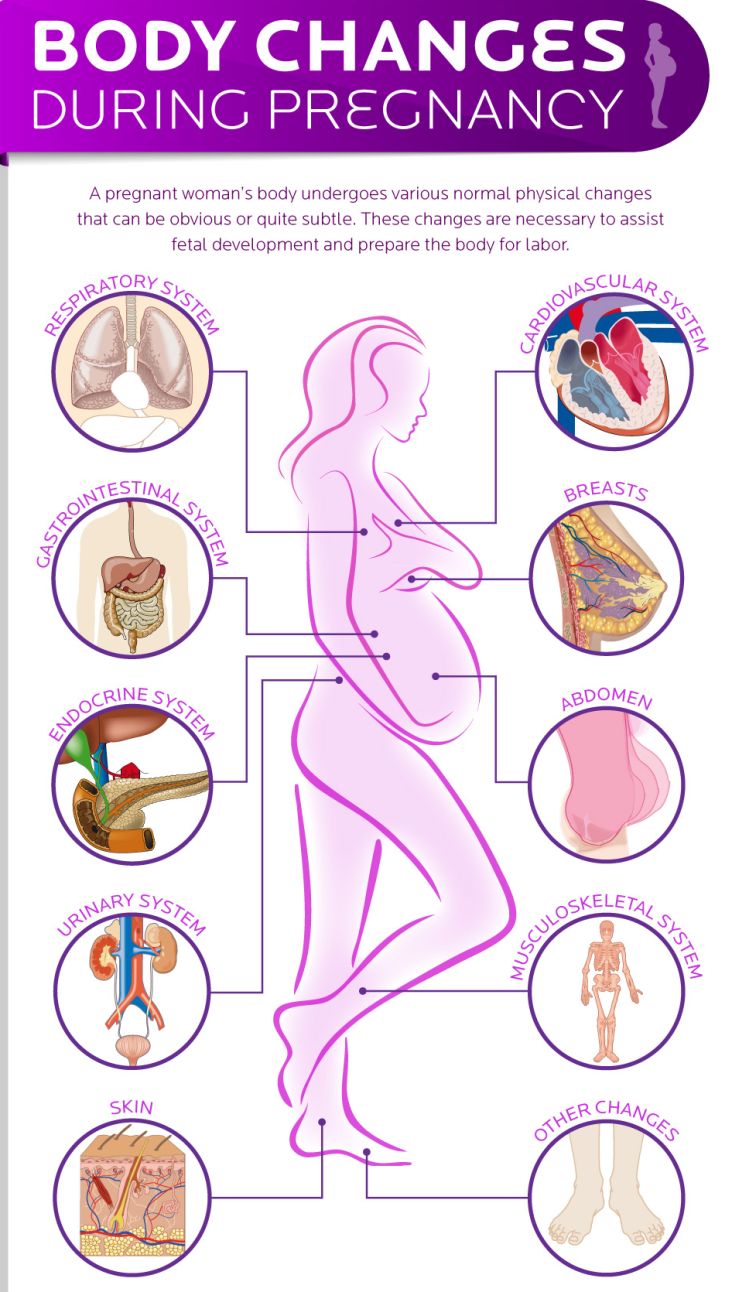 What Body Changes women experience during Pregnancy?
