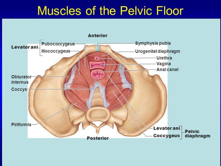 Pelvic Floor Exercises Improves Incontinence My Gynae